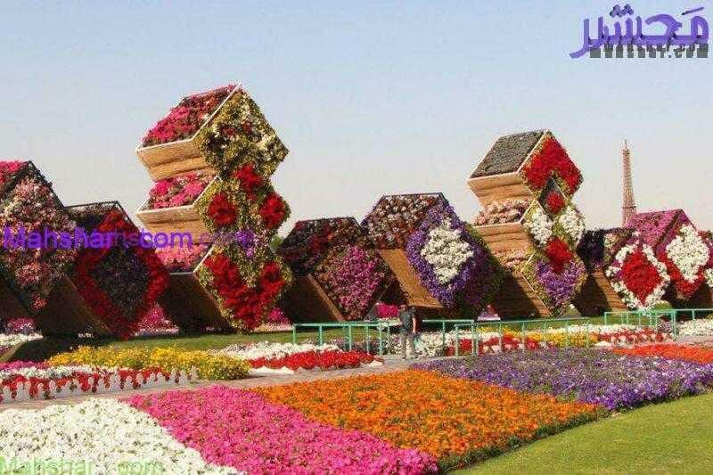 گل دبی معجزه1 17 باغ گل معجزه دبی | بزرگترین باغ گل دنیا