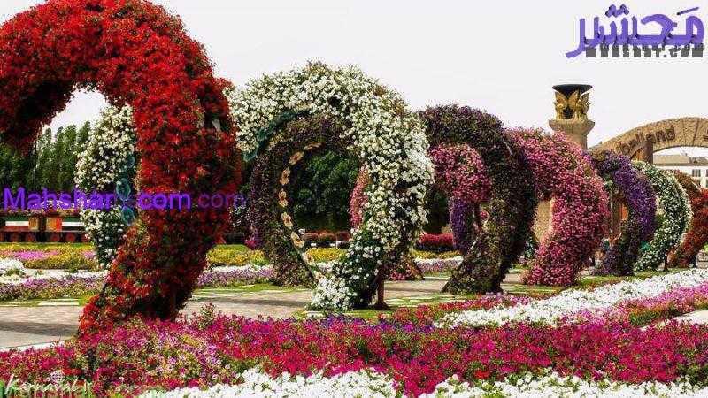 گل دبی0 1 71 باغ گل معجزه دبی | بزرگترین باغ گل دنیا