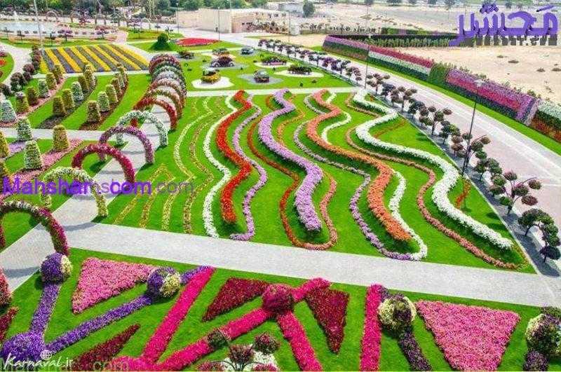 گل دبی10 63 باغ گل معجزه دبی | بزرگترین باغ گل دنیا