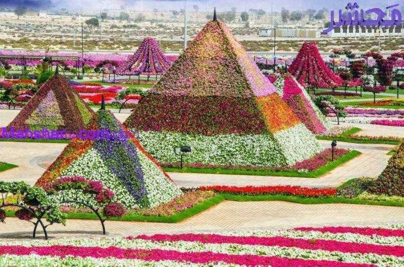 گل دبی2 55 باغ گل معجزه دبی | بزرگترین باغ گل دنیا