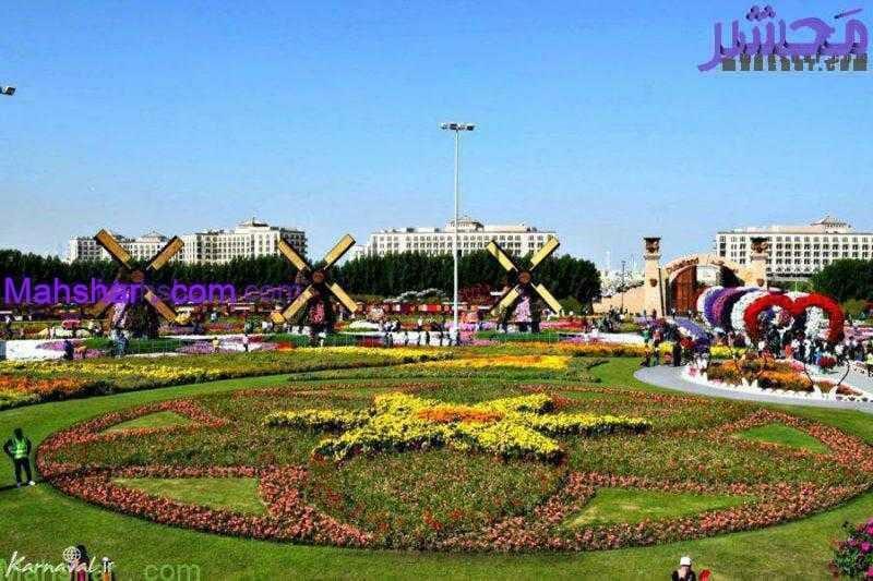 گل دبی50 1 53 باغ گل معجزه دبی | بزرگترین باغ گل دنیا