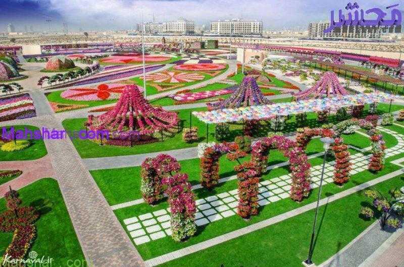 گل دبی51 37 باغ گل معجزه دبی | بزرگترین باغ گل دنیا