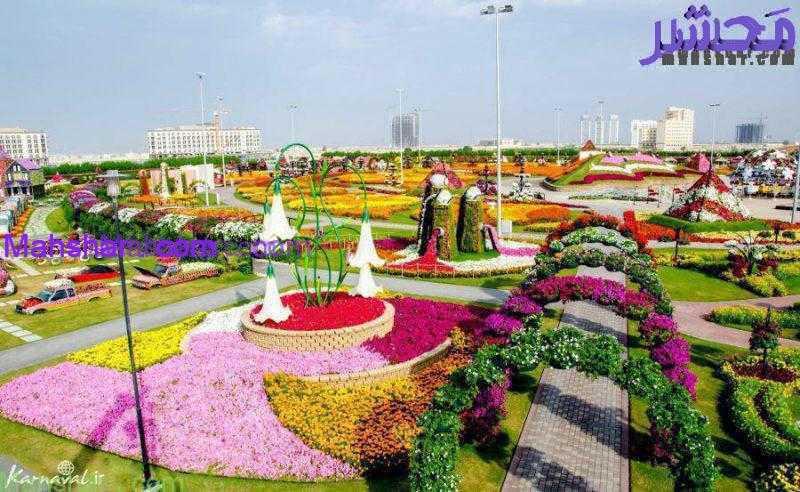 گل دبی6 25 باغ گل معجزه دبی | بزرگترین باغ گل دنیا