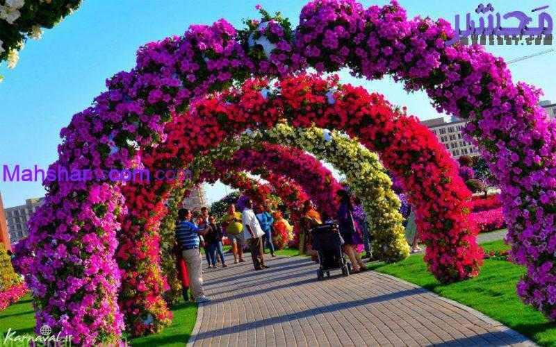 گل4 67 باغ گل معجزه دبی | بزرگترین باغ گل دنیا