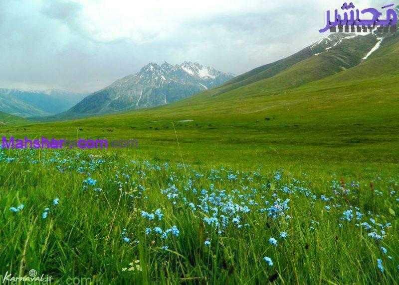 ملی پامیر0 59 باغ گل معجزه دبی | بزرگترین باغ گل دنیا