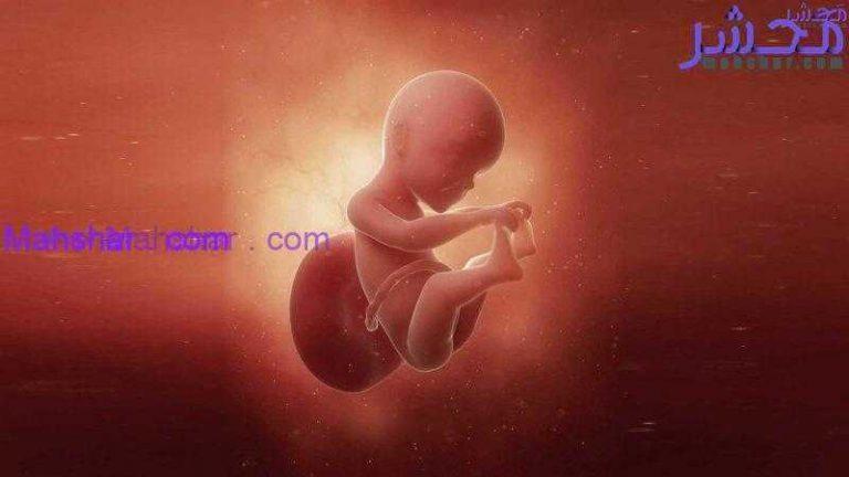 جنین در هفتۀ بیست و پنجم 1 رشد جنین در هفتۀ بیست و پنجم