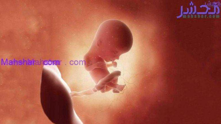 جنین در هفتۀ سیزدهم 1 رشد جنین در هفتۀ سیزدهم