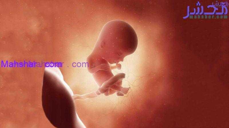 جنین در هفتۀ سیزدهم 9 رشد جنین در هفتۀ سیزدهم