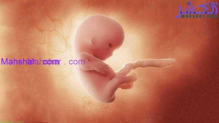 جنین در هفتۀ نهم 1 رشد جنین در هفتۀ نهم