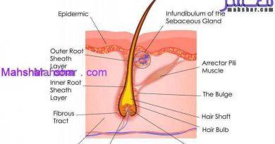 Follicle Moo5 16 فولیکول مو