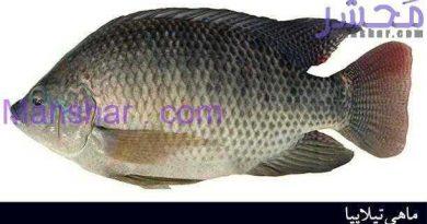 از ماهی تیلاپیا دوری کنید