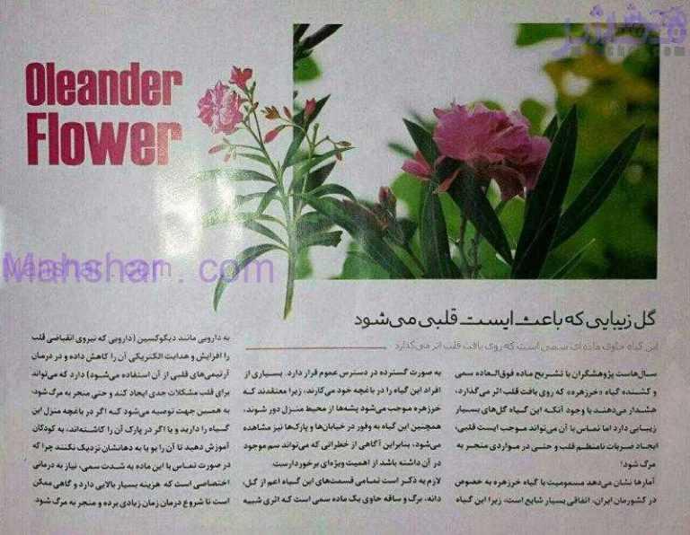 1 گل زیبایی که باعث ایست قلبی میشود!