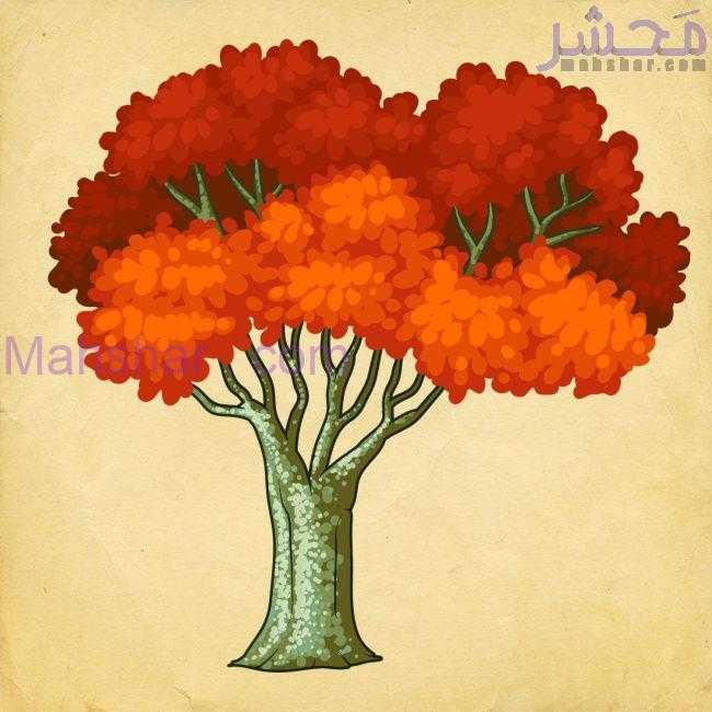 تست شخصیت شناسی: با انتخاب یک درخت شخصیت خود را بشناسید