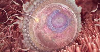 هفته دوم بارداری