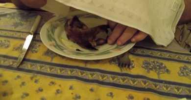 نوعی غذا در فرانسه وجود دارد که برای خوردن آن حتما باید دستمال روی سرتان بیندازید