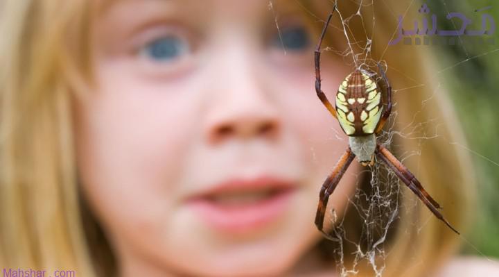 1. Arachnophobia 9 رایجترین فوبیاهای دنیا؛ مردم جهان از چه چیزهایی بیشتر میترسند؟