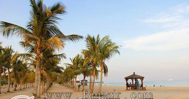 ساحل درختان نارگیل جزیره کیش