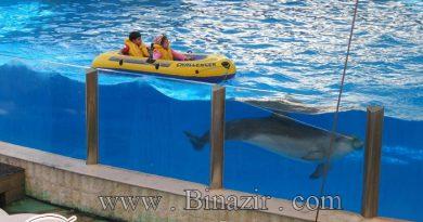پارک دلفین ها در کیش